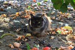 Gato macio Foto de Stock
