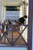 Gato macio e um cachorrinho do pastor alemão Imagens de Stock