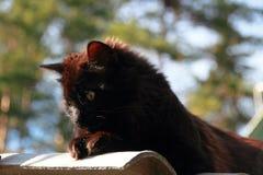 Gato macio preto Fotos de Stock Royalty Free