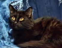 Gato macio preto com olhos amarelos imagens de stock royalty free