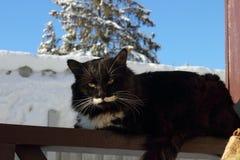 Gato macio preto e branco Imagem de Stock Royalty Free