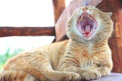 Gato macio vermelho com a boca largamente aberta que boceja Imagens de Stock Royalty Free