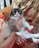 Gato mal-humorado Foto de Stock Royalty Free