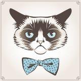 Gato mal-humorado Foto de Stock