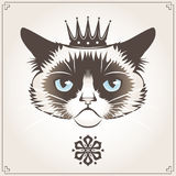Gato mal-humorado Imagem de Stock Royalty Free