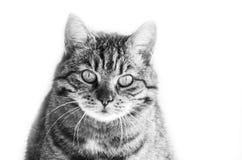 Gato mal-humorado Fotografia de Stock