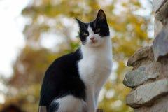 Gato mal-humorado Fotografia de Stock Royalty Free