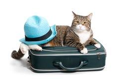 Gato, mala de viagem e chapéu Fotografia de Stock Royalty Free