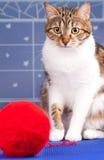 Gato malhado adulto Fotografia de Stock Royalty Free