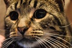 Gato malhado louco Foto de Stock Royalty Free