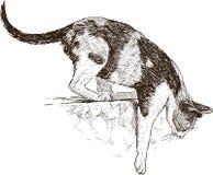 Gato manchado Imagem de Stock Royalty Free