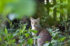 Gato manchado Foto de archivo libre de regalías