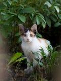 Gato manchado Imagen de archivo