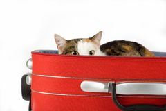 Gato manchado en la maleta, aislada Imagen de archivo libre de regalías
