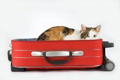 Gato manchado en la maleta, aislada Fotografía de archivo libre de regalías