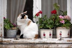 Gato manchado en una ventana Imagen de archivo libre de regalías
