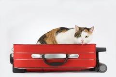 Gato manchado na mala de viagem, isolada Imagem de Stock Royalty Free