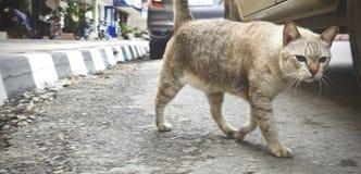 Gato marrón grande que se relaja en la calle Gato que descansa en calle el día soleado foto de archivo libre de regalías