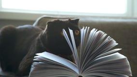 Gato marrón grueso en el sofá con un libro Un gato negro amarillo-observado metrajes
