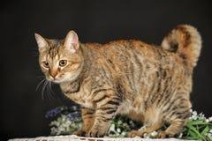 Gato marrón hermoso entre las flores Foto de archivo libre de regalías