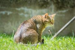 Gato marrón que se sienta Imágenes de archivo libres de regalías