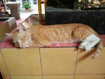 Gato marrón soñoliento en la tabla de la teja foto de archivo libre de regalías
