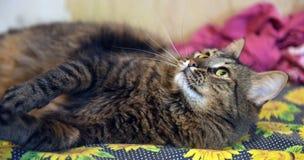 Gato marrón hermoso Imagen de archivo