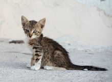 Gato marrom pequeno na rua, gato na rua no dia ensolarado, gato selvagem, gato marrom pequeno fora, gato na rua, curiosa Fotos de Stock Royalty Free