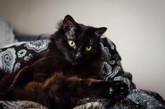Gato masculino negro hermoso que mira lejos en casa fotografía de archivo libre de regalías