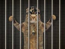Gato mau atrás das barras fotografia de stock royalty free