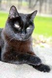 Gato mayor 2 Foto de archivo