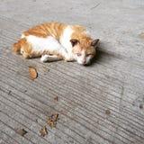 Gato medio dormido Imagen de archivo libre de regalías