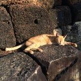 Gato medio dormido en la roca Imagen de archivo