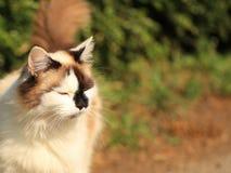 Gato Meditating Fotos de archivo libres de regalías