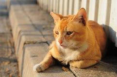 Gato mestizo Fotos de archivo