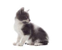 Gato mestizo Foto de archivo