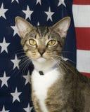 Gato mezclado de la casta Imágenes de archivo libres de regalías