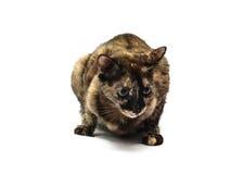 Gato mezclado lindo de la raza imagenes de archivo