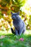 Gato mimoso Fotos de archivo