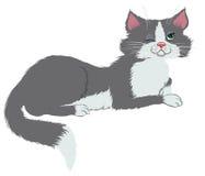 Gato misterioso ilustração royalty free