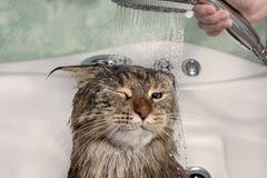 Gato mojado en el baño fotos de archivo