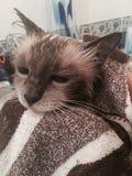Gato molhado Fotografia de Stock