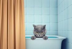 Gato molhado bonito no banho fotografia de stock royalty free