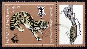 Gato montés, Plovdiv, EXPO 81, circa 1981 Imágenes de archivo libres de regalías