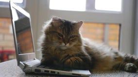 Gato mullido agradable que miente en un cuaderno abierto 1920x1080 metrajes
