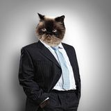 Gato mullido divertido en un traje de negocios Foto de archivo libre de regalías