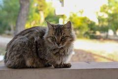 Gato mullido hermoso en una pared, Limassol, Chipre fotos de archivo