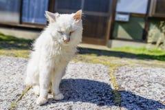 gato mullido nómada blanco del gatito que se coloca en la sol para conseguir fotos de archivo