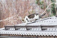 Gato mullido que camina en el tejado gris moderno Foto de archivo