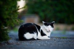 Gato mullido que duerme en el camino imagen de archivo libre de regalías